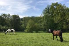 Pferde bei der Günthersmühle